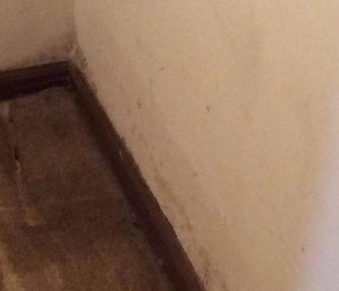 Water Damage Led to Mold Growth in Phoenixville Before