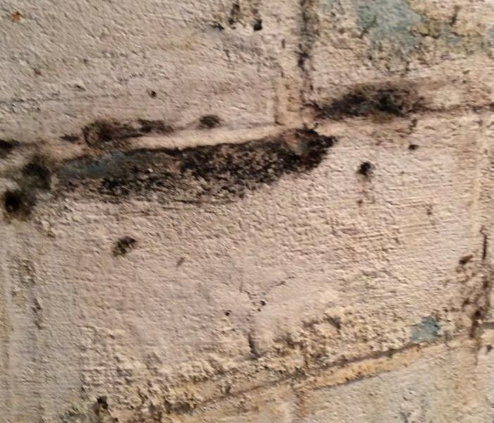 Dreary Basements in Phoenixville Are Cozy Havens for Mold Growth