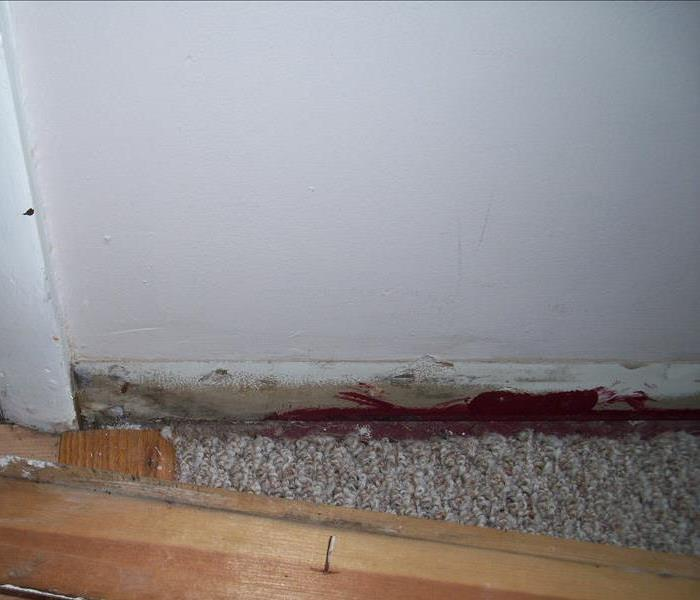 Commercial Don't Let Mold Interfere with Your Phoenixville Business