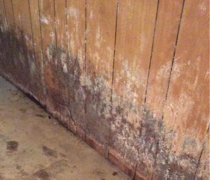 Mold Remediation Who Is Most At Risk???