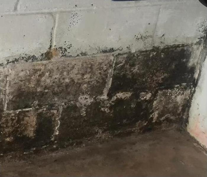 Black mold growth on wall