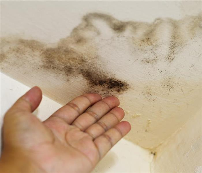 Hand showing mold growth on ceiling